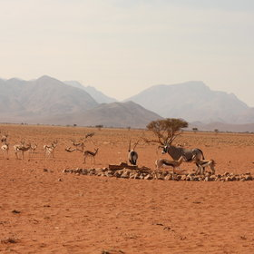 ... with views towards a well frequented waterhole.