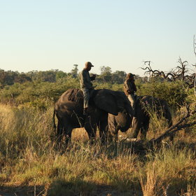 The activities mainly focus on riding and walking with the habituated elephant herd.