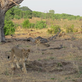Activities include day and evening game drives in a wildlife rich area...