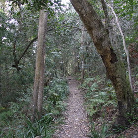 ...with opportunities to wander through the forests of Tsitsikama Coastal National Park...