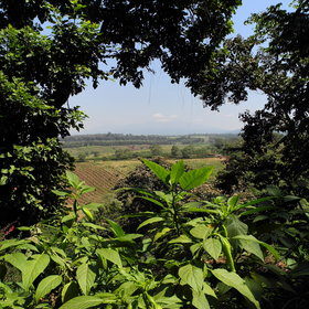 ... with views over the surrounding coffee plantation and the rolling green hills.