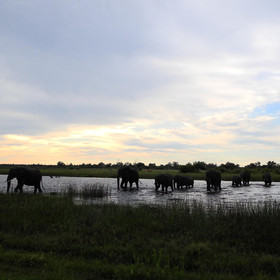 Savuti is famous for it's high density of elephants...