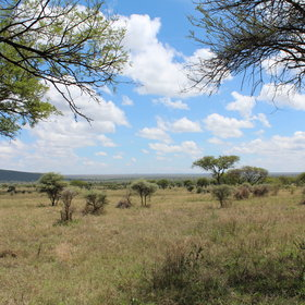 ...and enjoy the Serengeti views - look out for the wildebeest!