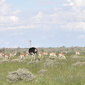 ...to explore the Etosha National Park.