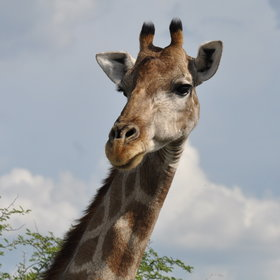 ...as well as a variety of plains game on the surrounding land, such as giraffe, oryx and kudu.