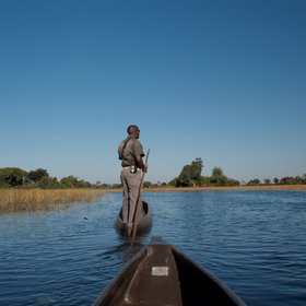 ...or in a mokoro (traditional dug-out canoe), always with an expert guide