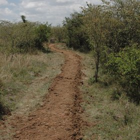 Elephant dung pathways lead to...