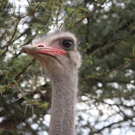 And don't forget to say hello to the ostriches!