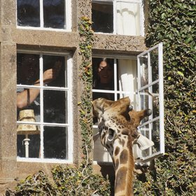 Like several other rooms, it's easy to feed the giraffes in the morning from Jock's Room.