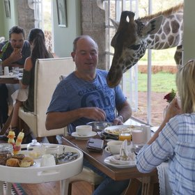 …and guests have to take turns to eat, feed the megafauna and take photos of each other.