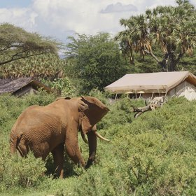 Elephant Bedroom is tucked into the riverine forest on the banks of the Ewaso Nyiro.