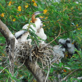 ...and discover the birds nesting on bird island.