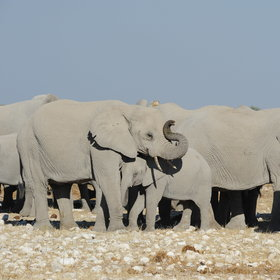 …visited by an extensive diversity of wildlife, such as elephants…