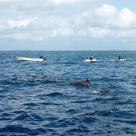 ... take a trip to see the resident pod of bottlenose dolphins...