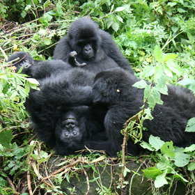 Bishops House is located in the town of Ruhengeri, making it a convenient base for gorilla trekking