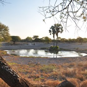 ...located around a floodlit waterhole...