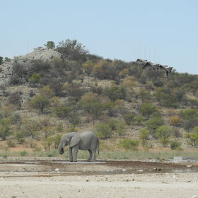 ...in the far west side of Etosha National Park.