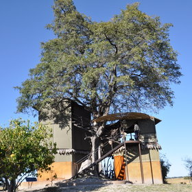 The main area of Jackaberry Camp is built around a large Jackalberry tree...