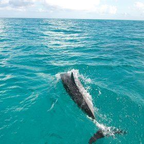Another popular excursion is to go on a dolphin watching trip...