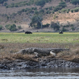 From boats trips on the Chobe riverfront you may get up, close and personal...