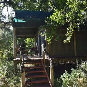 Royal Tree Lodge offers tented accommodation making it unusual for a property in Maun.