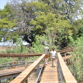 ....and each are linked by raised wooden walkways, through the lush vegetation.