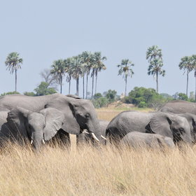 ...activities here focus on game drives on Hunda Island...