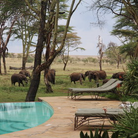 ...and there's often wildlife around to enjoy from the comfort of the lodge.