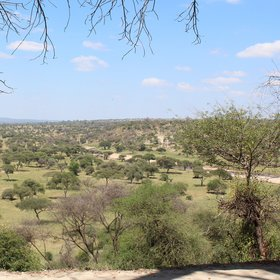 Tarangire Safari Lodge is set on the edge of an escarpment within Tarangire National Park
