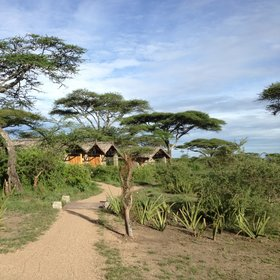 Ndutu is a good-value lodge beside a lake in the short-grass plains of the Serengeti…