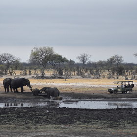 ...but flexible 4WD game drives can often get you closer to the wildlife.