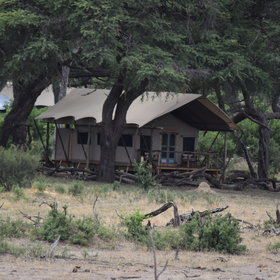 Somalisa Expedition has six rooms set amongst a grove of Acacia trees.