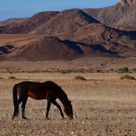 ...the desert horses are the main draw.