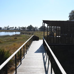 Qorokwe Camp is located in a great wildlife viewing area of the Okavango Delta.