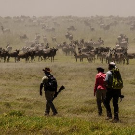 Serengeti Green Camp offers the opportunity to explore the Serengeti on foot.