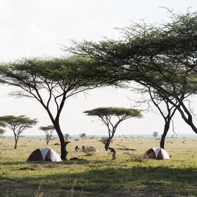 Serengeti Walking Mobile Camp