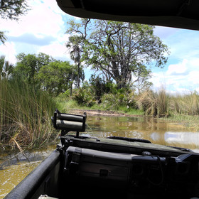 Nxabega is in one of the wetter regions of the Okavango Delta and it's an interesting drive...