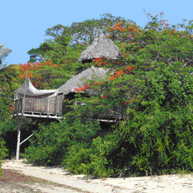 Tree-house Saba, at Chole, is one of the largest rooms - built in a lovely flamboyant tree