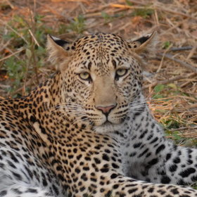 Wildlife safaris in Zambia